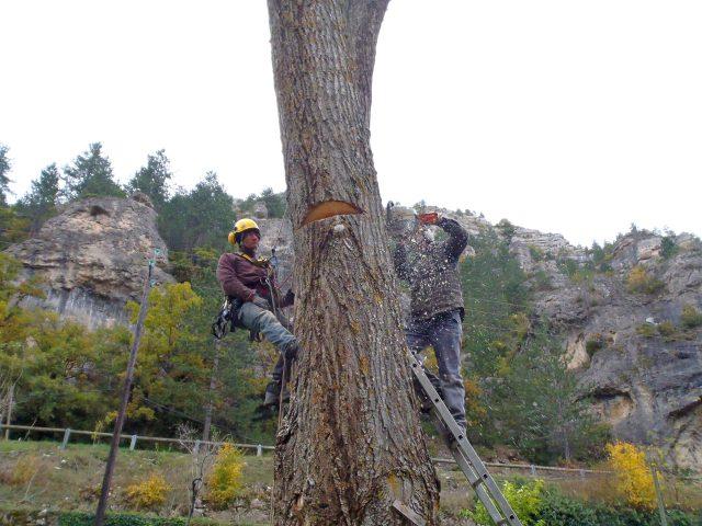 Coupe arbre Sainte Enimie